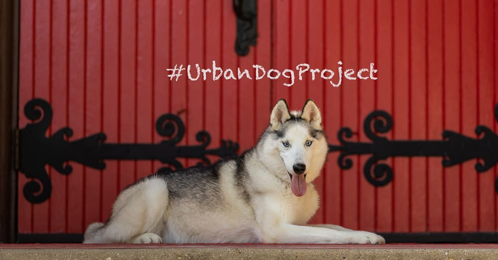 Urban Dog Project