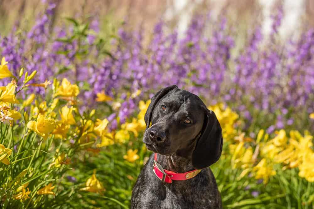 Shadow Dog Photography, Pet Photography, Dog Photography, Pet Photographer, Kenosha, Urban Dog Project