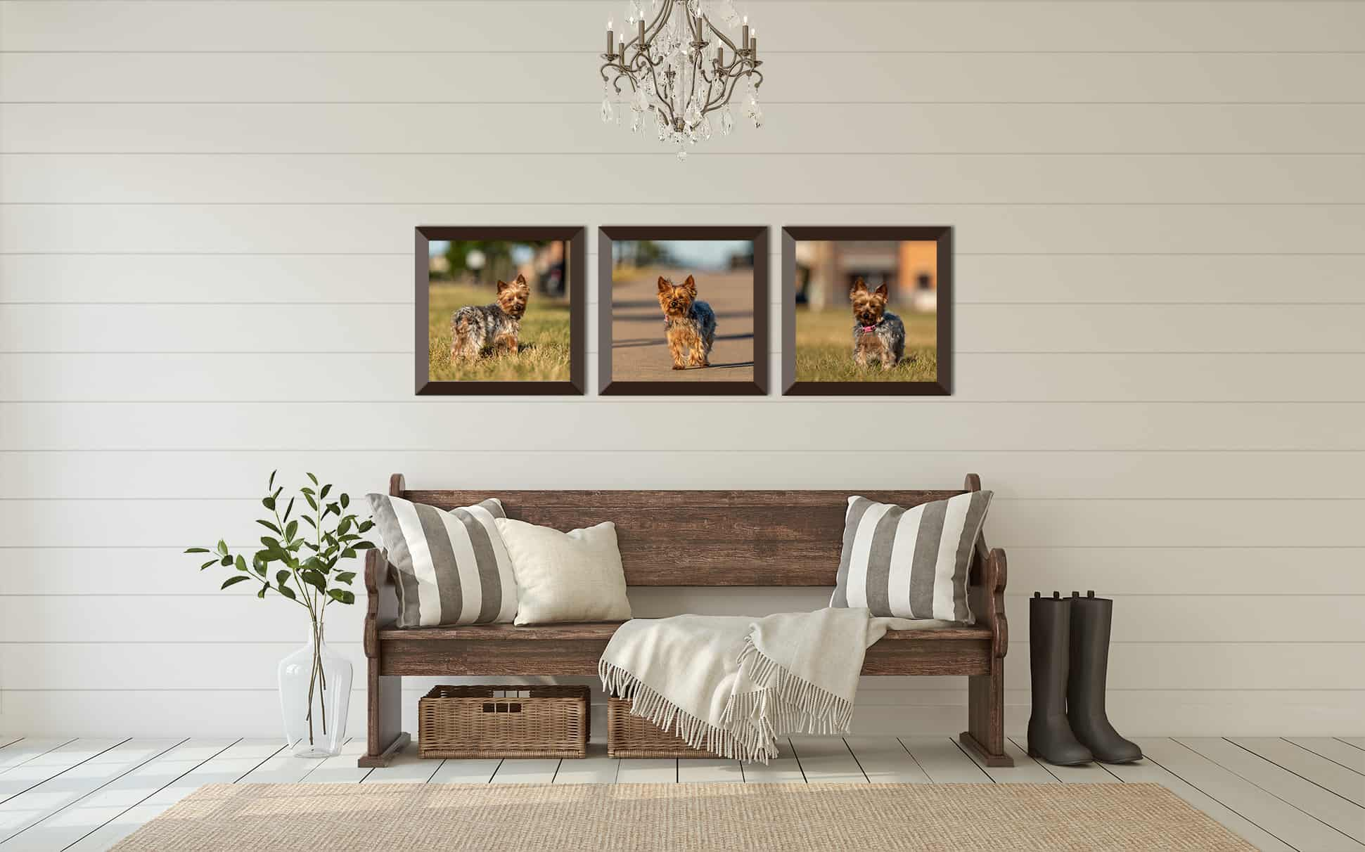 Framed Prints of Yorkie Terrier Shadow Dog Photography
