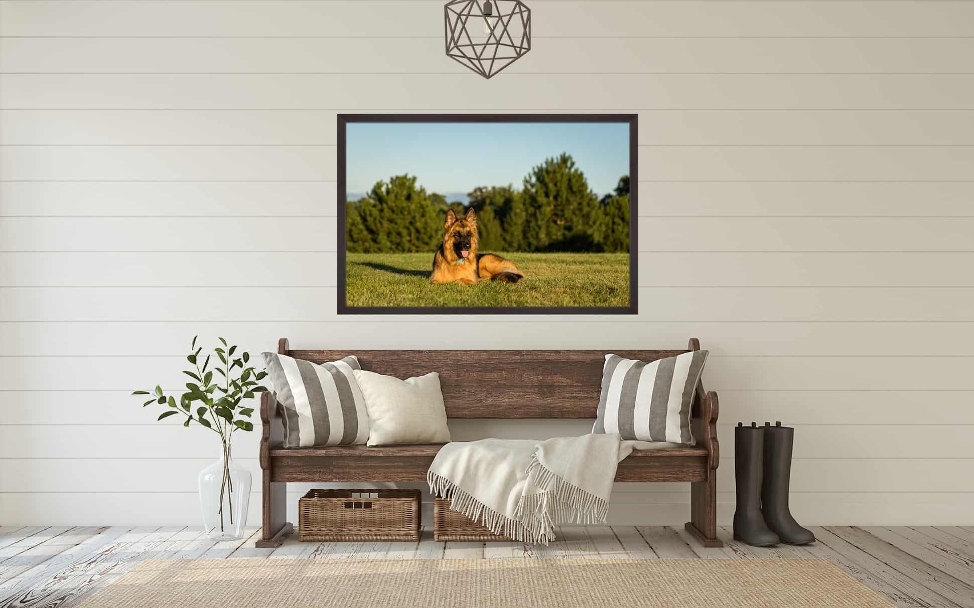 Framed Print of German Shepherd Dog in Home Entryway