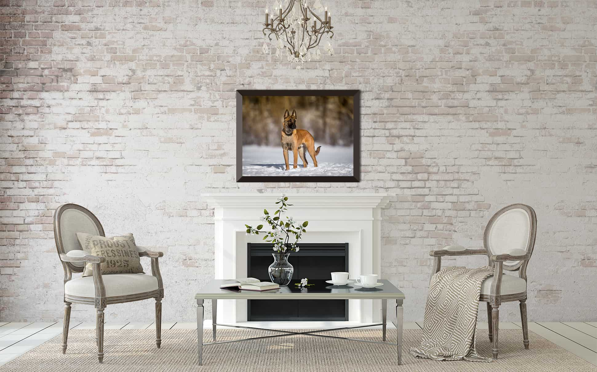 Framed Print of Belgian Malinois over Fireplace from Shadow Dog Photography