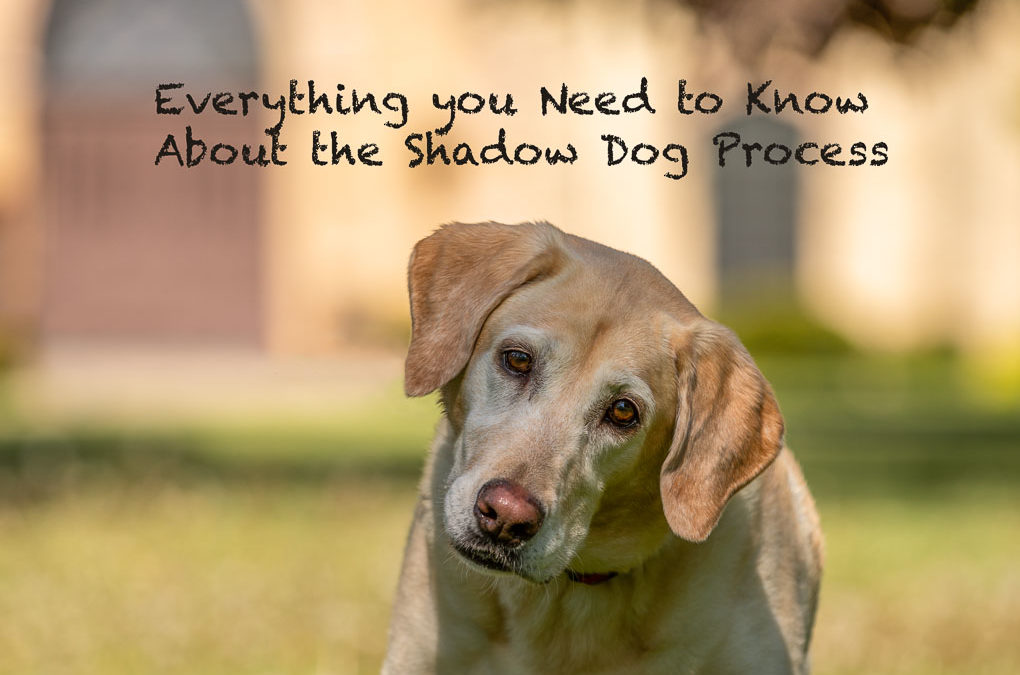 The Shadow Dog Process
