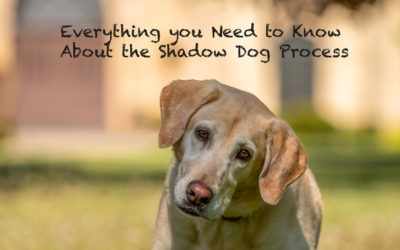 The Shadow Dog Process