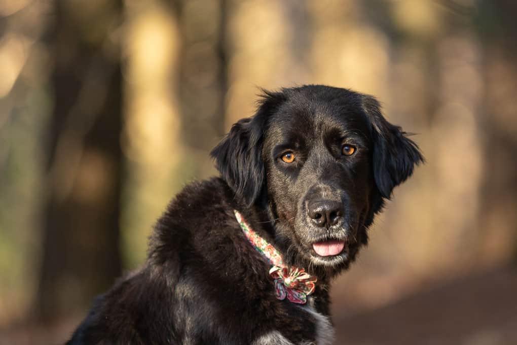 Black Dog Shadow Dog Photography