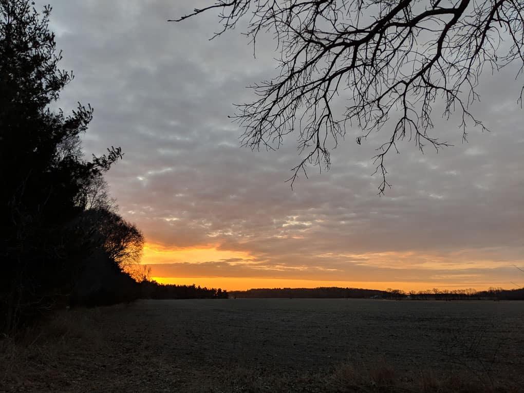 Morning Sunrise Shadow Dog Photography