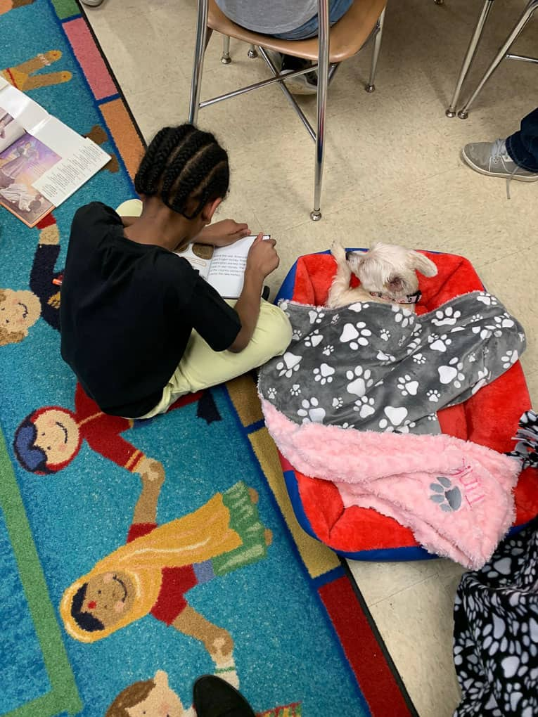Child Reading to Therapy Dog Shadow Dog Photography