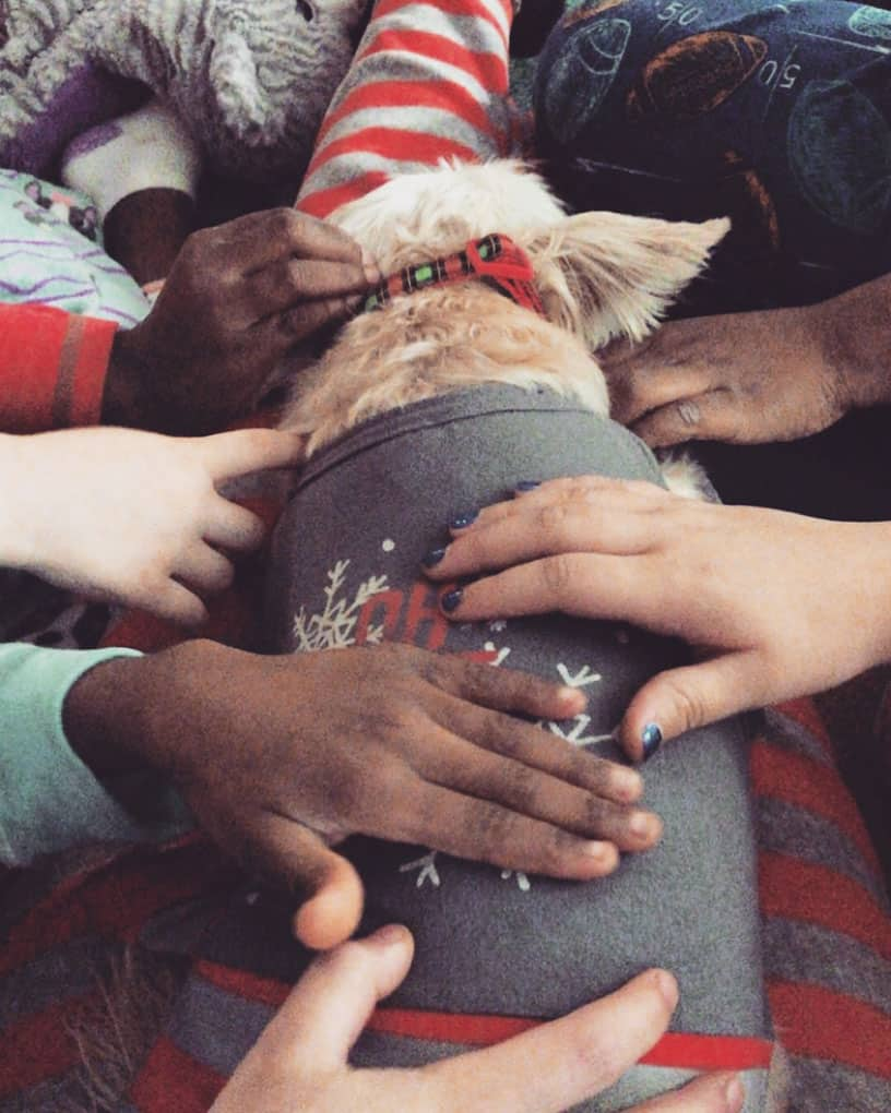 Children Petting a Therapy Dog Shadow Dog Photography