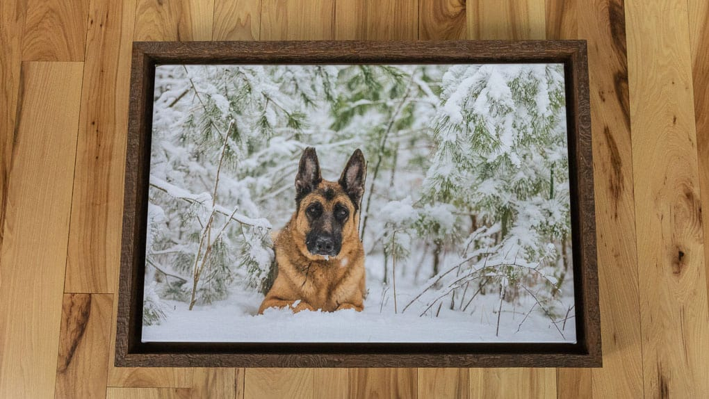 Framed Canvas Shadow Dog Photography