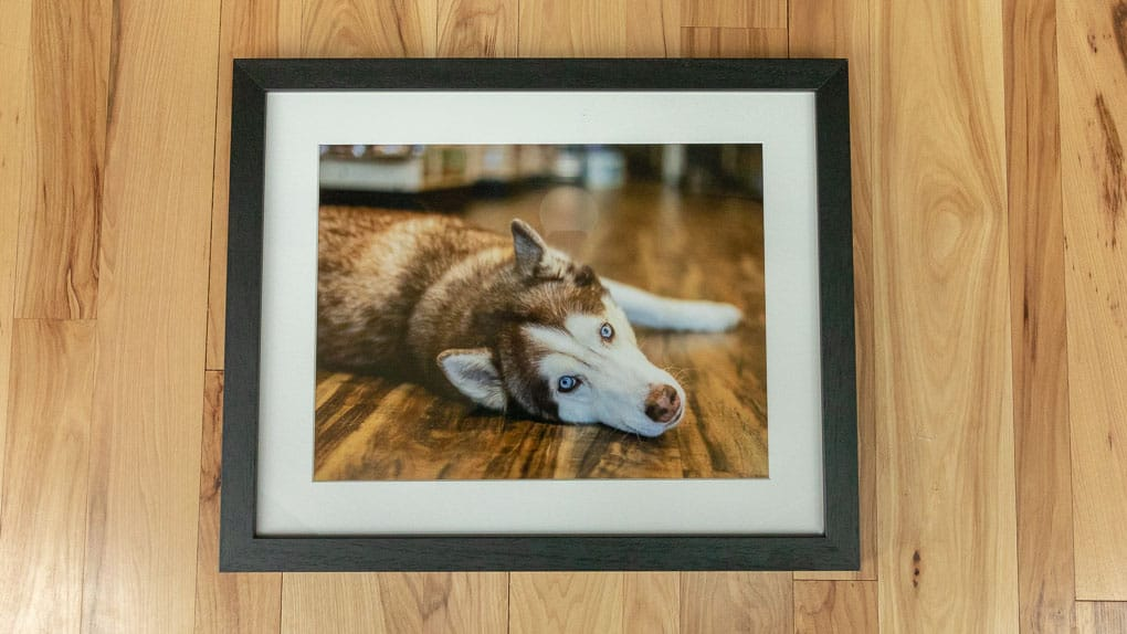 Framed Print of Husky Shadow Dog Photography