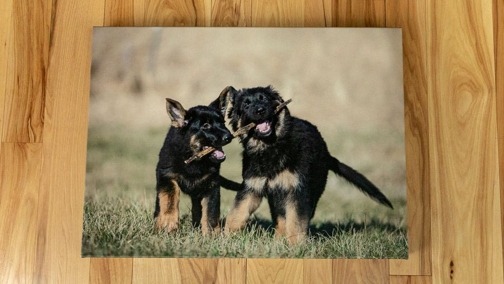 Two Puppies on Canvas Shadow Dog Photography